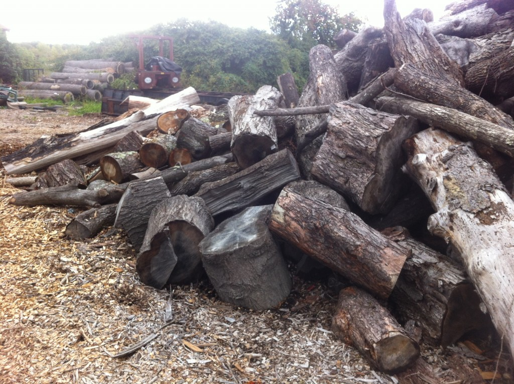 Some of the many mountains of logs in Western Mass.