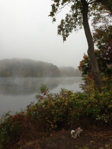 Morning fog over the mill pond behind the studio.